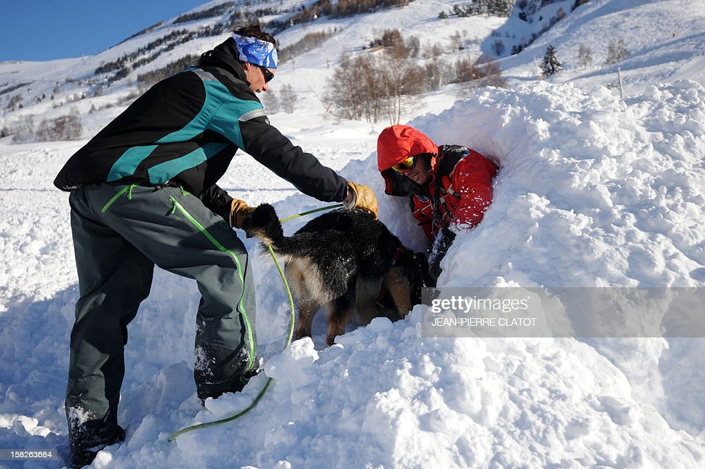 An avalanche dog flanked by his master, frees a person buried in the snow, on December 11, 2012, during an avalanche dogs training session near Les Deux Alpes ski resort in the French Alps. France, with 140 avalanche rescue teams with dogs, is a reference in this activity sector which trains foreigners from Europe and other continents.