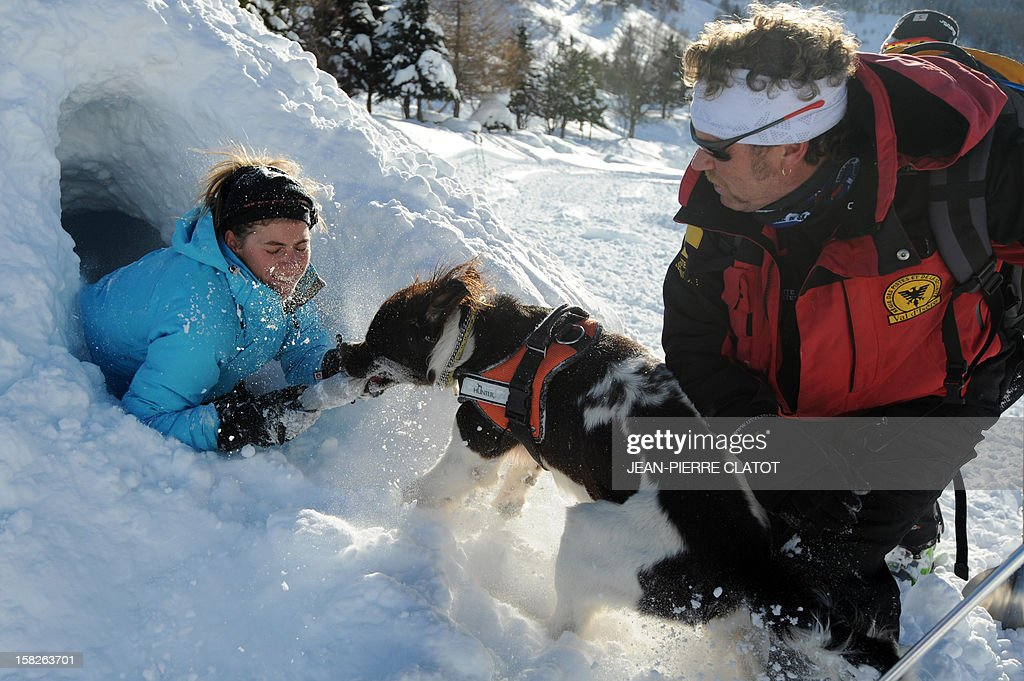 An avalanche dog, frees a person buried in the snow as his master looks on, on December 11, 2012, during an avalanche dogs training session near Les Deux Alpes ski resort in the French Alps. France, with 140 avalanche rescue teams with dogs, is a reference in this activity sector which trains foreigners from Europe and other continents.