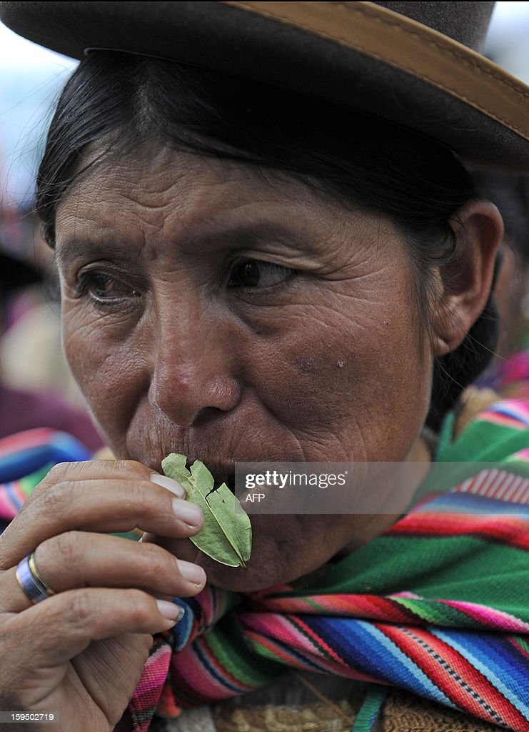 An Aymara indigenous woman chews coca leaves during a celebration for the reincorporation of Bolivia to the UN Convention Against Illicit Traffic in Narcotic Drugs in La Paz on January 14, 2013. 'The coca leaf is not any more seen as cocaine (..), it is a victory of our identity' said Bolivian President Evo Morales. AFP PHOTO/Jorge Bernal