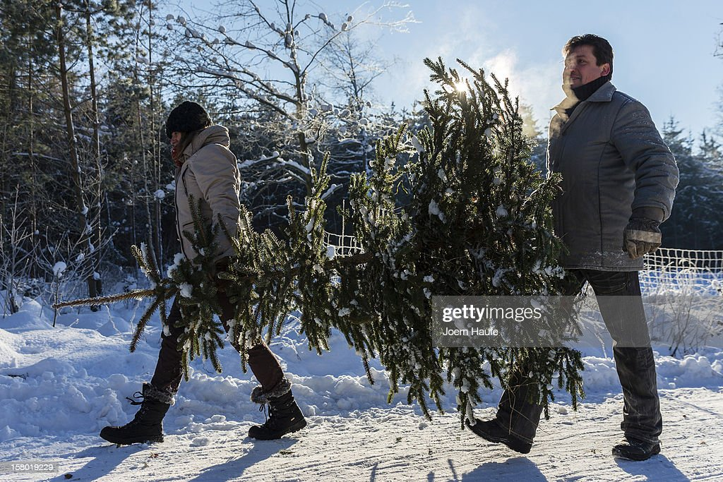 An couple carry a Christmas tree they chose and sawed down themselves in a forest on December 8, 2012 in Fischbach, Germany. Forestry officials in the state of Saxony officially opened the 2012 Christmas tree season for people who want to retrieve their tree from designated forests rather than just buying it readily cut.