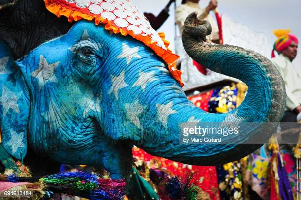 An decorated elephant displaying its trunk at the Elephant Festival in Jaipur Elephant Festival, Rajasthan, India