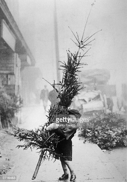An early arrival at Spitalfields Market London puts a youthful shoulder to the task of carrying a Christmas tree home