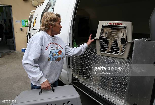 An East Bay SPCA worker moves a crate with a dog that was rescued from a South Korean dog meat farm at the San Francisco the San Francisco Society...