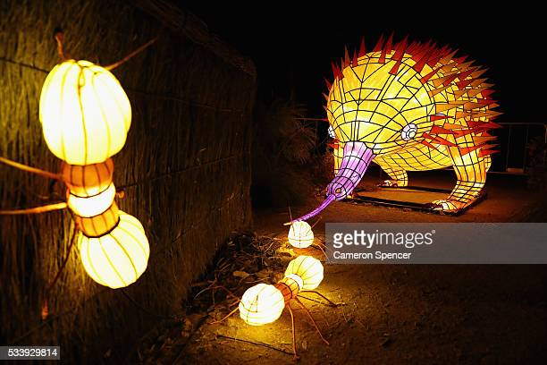 An echidna light sculpture eating ants is displayed during a media preview of Vivid Sydney illuminated displays at Taronga Zoo on May 24 2016 in...
