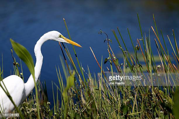 An egret stands in the Everglades National Park after the park reopened to visitors today following a 16day closure stemming from the partial federal...