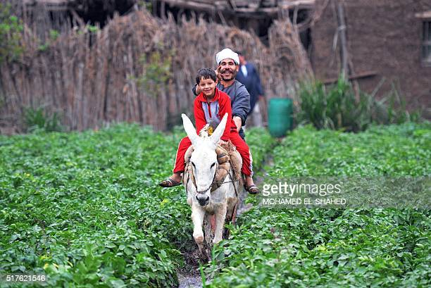 An Egyptian boy rides a donkey in the village of Shamma in the Egyptian Nile Delta province of alMinufiyah on March 26 2016 / AFP / MOHAMED ELSHAHED