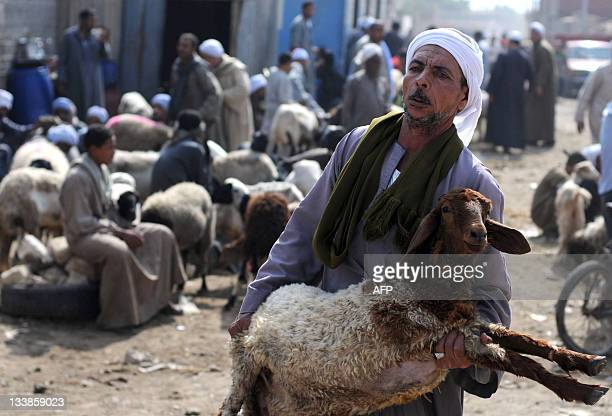 An Egyptian man carries his sheep that he bought from a livestock market ahead of EidalAdha celebrations in cairo on November 4 2011 Muslims will...