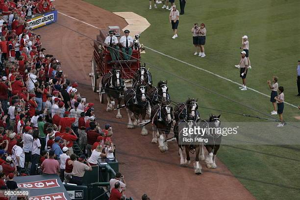 An eighthorse Budweiser Clydesdale hitch rides onto the field after the final regular season game at Busch Stadium on October 2 2005 in St Louis...