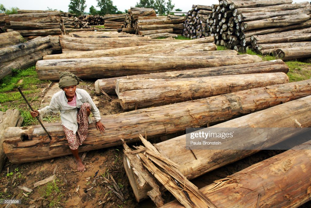 An elderly Burmese woman rests on large teak logs marked for export in a government-run lumberyard June 11, 2003 in Pyin Ma Bin, Myanmar. Teak wood is common in Myanmar and is in high demand in Japan and most of Asia. With the exception of humanitarian assistance, Western countries have maintained an embargo on foreign aid to Myanmar since the military's bloody crackdown on democracy protest in 1988. This continues to be a blow to the country's struggling market economy causing widespread poverty. Opposition leader Aung San Suu Kyi, remains in 'protective custody' after a clash on May 30, 2003 between supporters and a pro-government group last week.