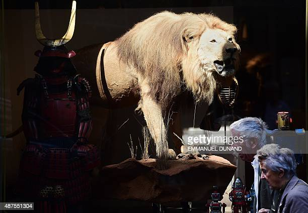 An elderly couple walks by an art gallery displaying a preserved lion via taxidermy displayed at a gallery in Brussels on September 10 2015 AFP...