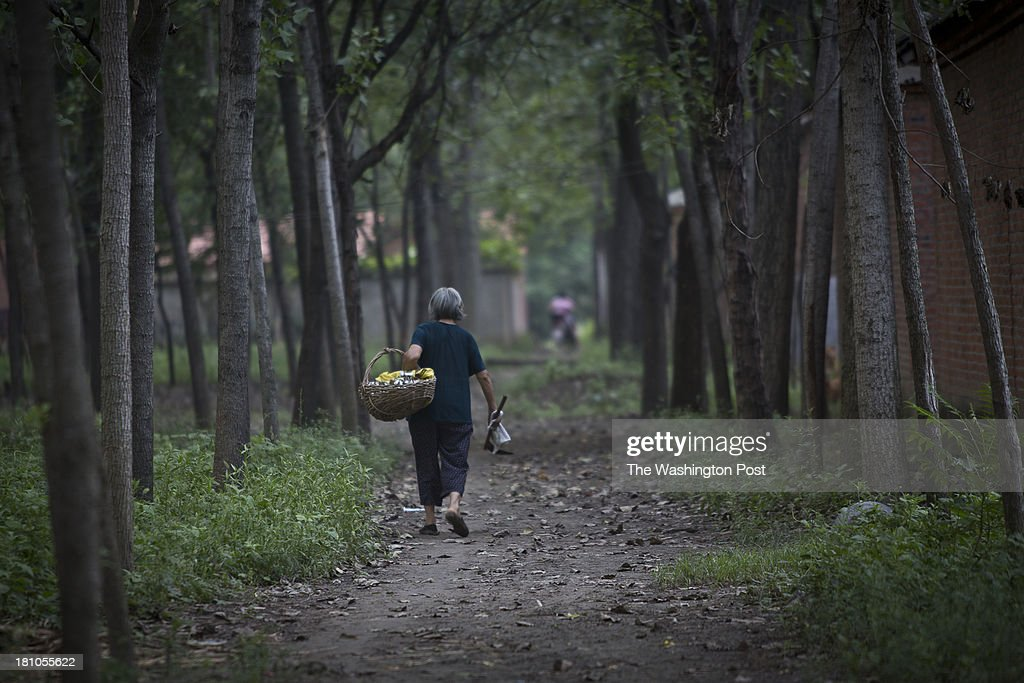 An elderly farmer carries cotton harvest from the field through a rural village near Fuyang, Anhui Province, China on 28 August 2013. As able-bodied adults seek work in cities in hopes of better income, more and more villages in China are inhabited mostly by the elderly and children.