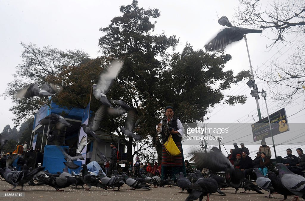 An elderly Indian Buddhist feeds pigeons at Chowrasta mall in Darjeeling on December 22, 2012. Kangchenjunga The economy of the eastern Indian state of Sikkim is being buoyed by the ever increasing numbers of foreign and domestic tourists keen to view the mountains of the Himalayan mountain range. AFP PHOTO/ Diptendu DUTTA