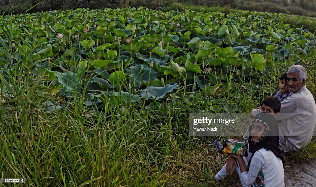 An elderly Kashmiri man rest with his grand children near the floating lotus garden in Dal lake on August 22, 2017 in Srinagar, the summer capital of Indian administered Kashmir, India. Lotus flowers are in full bloom in ecologically rich Dal Lake. The flowers and leaves rise on their slender stalks three or four feet from the surface of the lake in the months of July and August. Its root, Nadru or Nelumbo nucifera, is a savoured delicacy of Kashmir people and fetches over $7,920,164 (50 Crore INR) annually for vegetable dealers.