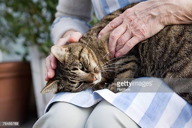 An elderly Scandinavian woman strokes cat on lap Sweden.