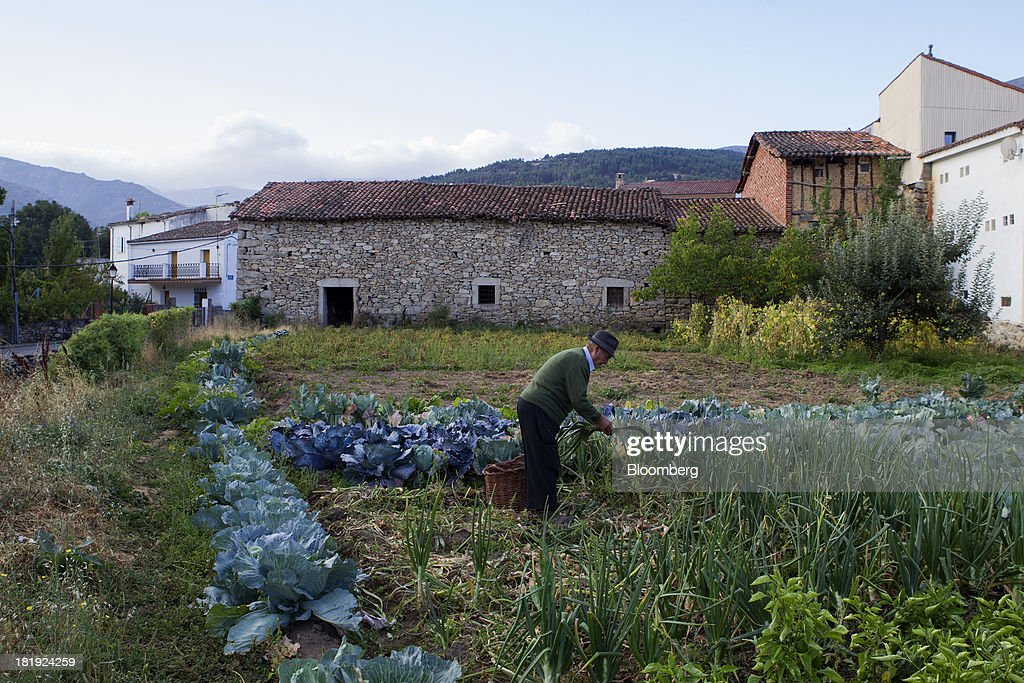 An elderly Spanish man uses a scythe to harvest onions in a field in Bohoyos, Spain, on Thursday, Sept. 26, 2013. Prime Minister Mariano Rajoy is increasingly dependent on the pension reserve fund as it reaps lower returns on Spanish sovereign debt, which comprise 97.5 percent of its investments. Photographer: Antonio Heredia/Bloomberg via Getty Images