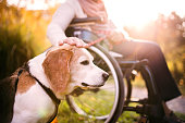 Unrecognizable elderly woman in wheelchair with dog in autumn nature. Senior woman on a walk.