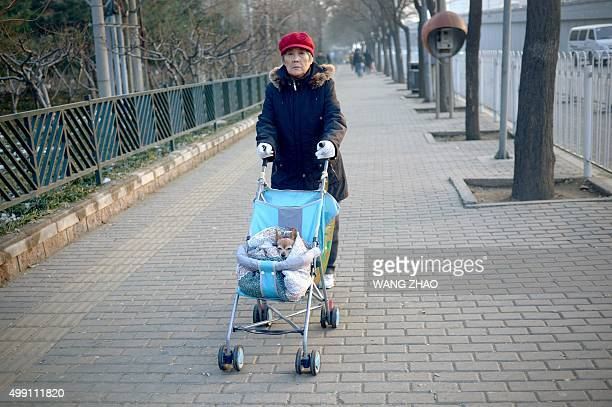 An elderly woman pushes a baby stroller with a pet dog on board along a sidewalk in Beijing on November 29 2015 / AFP / WANG ZHAO