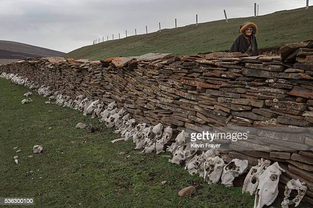 An elederly Tibetan nomad woman walks past horse skulls used for prayer at a temporary camp for picking cordycep fungus on May 22 2016 on the Tibetan...