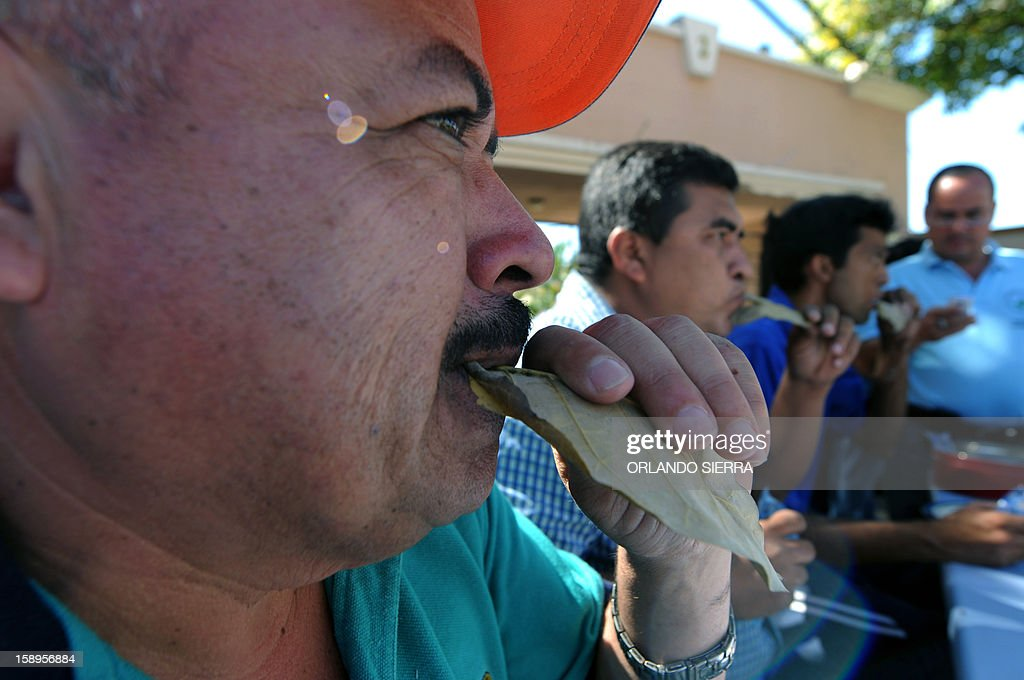 An elementary school teacher eats a dry leaf during a protest in front of the Presidencial Palace in Tegucigalpa, on January 4, 2013. Some 200 teachers protest demanding the government of Honduran President Porfirio Lobo the pay of their salaries and the extra month's Christmas salary. AFP PHOTO / Orlando SIERRA
