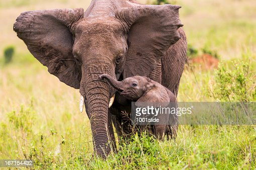 An elephant and its baby walking in long grass