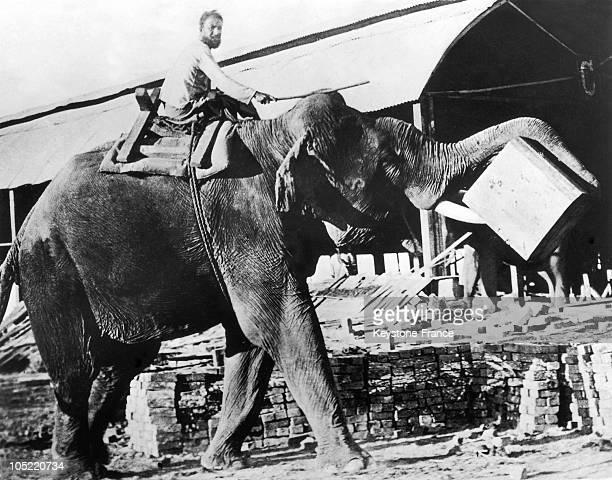 An Elephant Carrying Teak Wood In Rangoon Burma Between 1930 And 1955