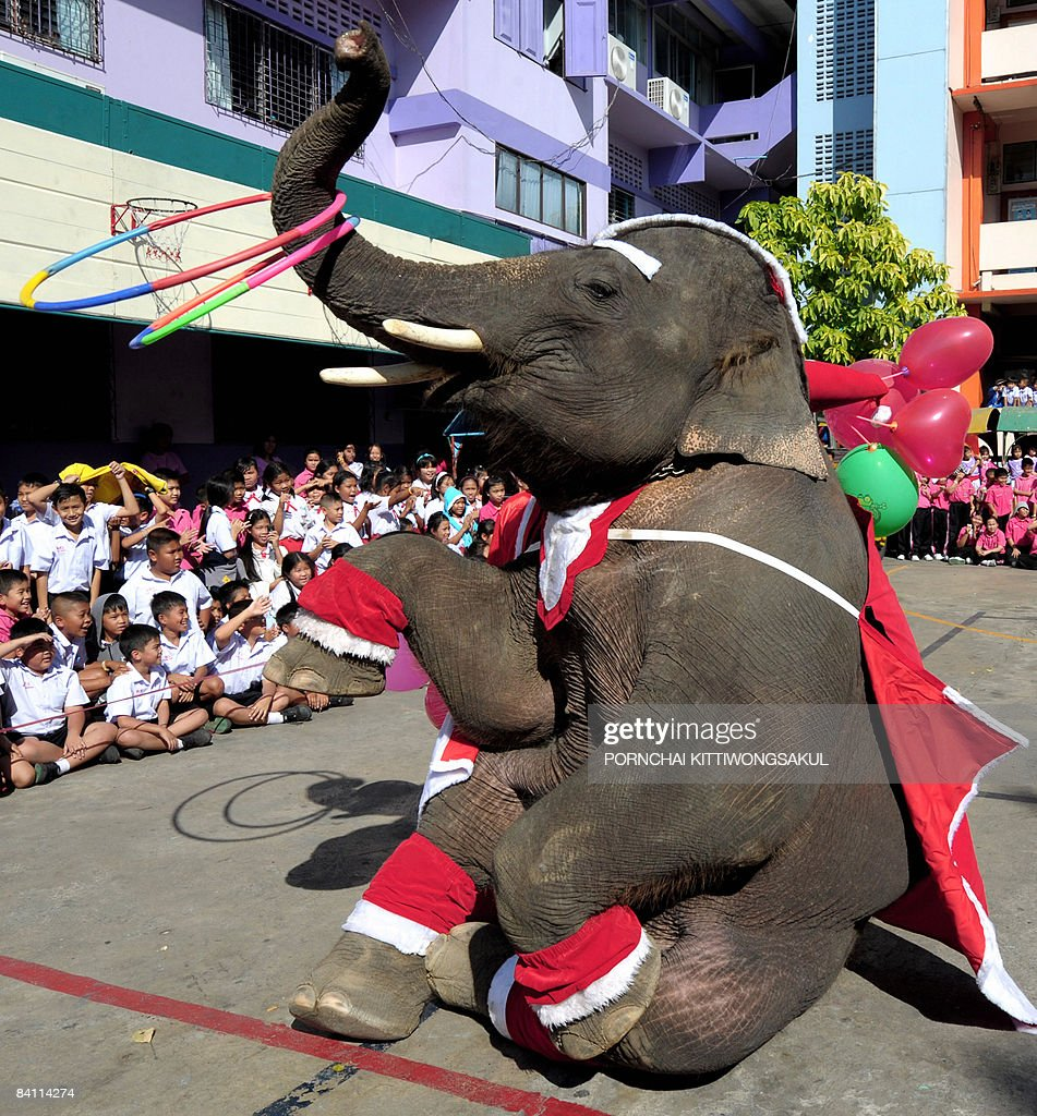 An Elephant dressed in Santa Claus costume performs during a Christmas festival celebration at a school in Ayutthaya province northern Bangkok on December 23, 2008. The event was held as part of a campaign to promote Christmas festival in Thailand.