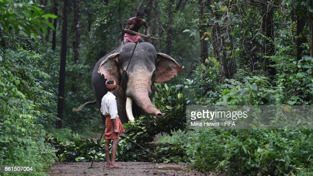 An elephant fetching food at the Kodanad Elephant Centre during the FIFA U17 World Cup India 2017 tournament on October 15 2017 near Kochi India