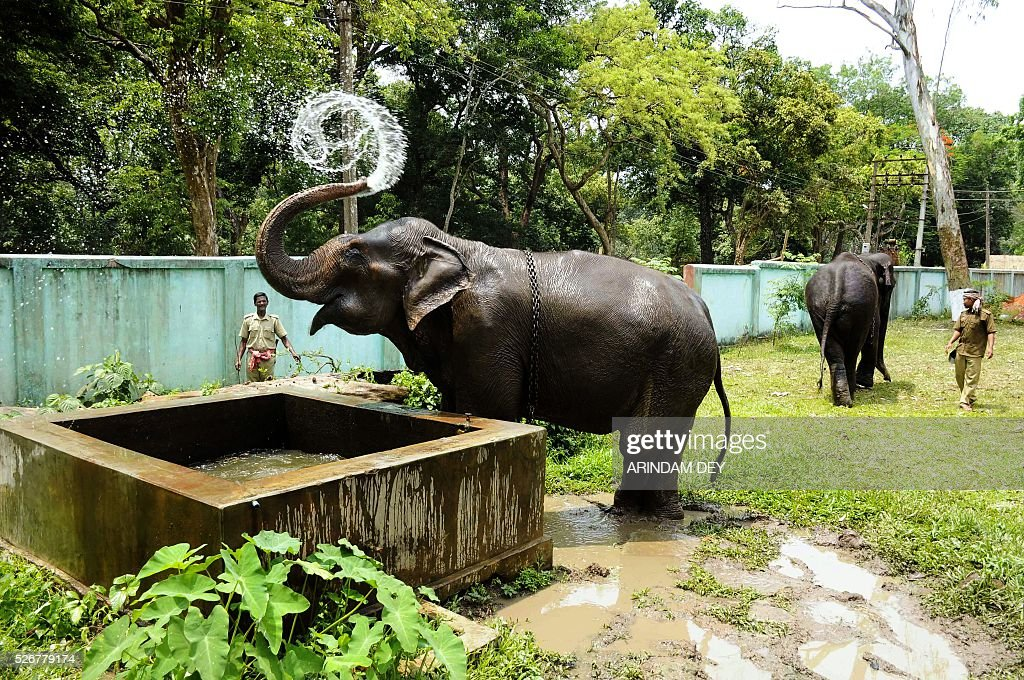 An elephant is watched by a keeper as it bathes during a hot summer day at Sepahijala wildlife sanctuary, on the outskirts of Agartala on May 1, 2016. India is officially in the grip of its worst water crisis in years, with the government saying that about 330 million people, or a quarter of the population, are suffering from drought after the last two monsoons failed. / AFP / ARINDAM DEY
