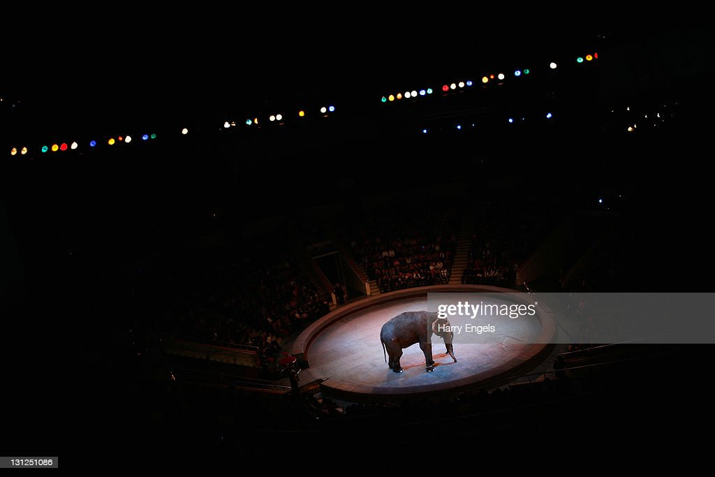 An elephant performs at the Yekaterinburg Circus on November 3, 2011 in Yekaterinburg, Russia. Yekaterinburg is one of thirteen cities proposed as a host city for the 2018 FIFA World Cup in Russia.