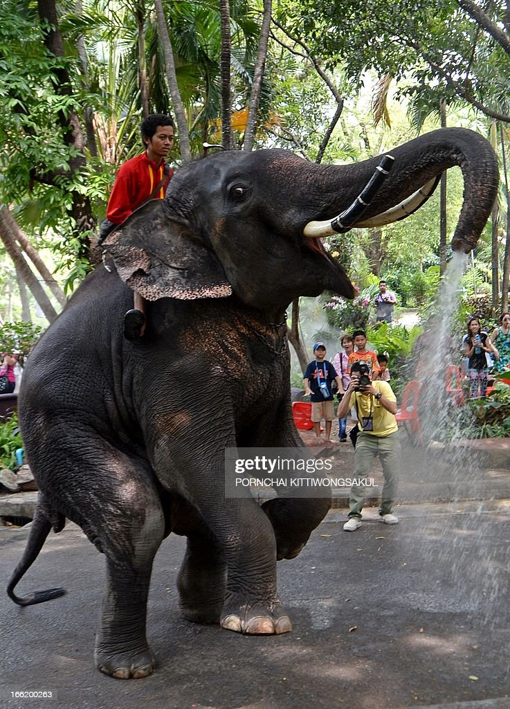 An elephant sprays to promote the Songkran festival at Dusit Zoo in Bangkok on April 10, 2013. Songkran is the Thai New Year which starts on April 13 during which people celebrate by splashing water over each other. AFP PHOTO / PORNCHAI KITTIWONGSAKUL