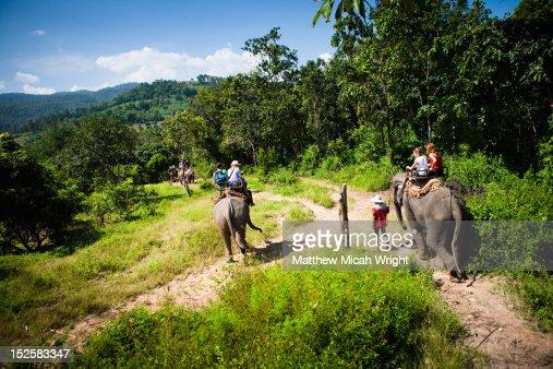 An elephant trekking down trails. : Stock Photo