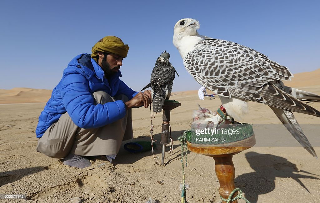An Emirati falconer prepares to train his birds on January 6, 2016, during the Liwa 2016 Moreeb Dune Festival in the Liwa desert, some 250 kilometres southwest of Abu Dhabi. The festival, which attracts participants from around the Gulf region, includes a variety of races (cars, bikes, falcons, camels and horses) or other activities aimed at promoting the country's folklore.
