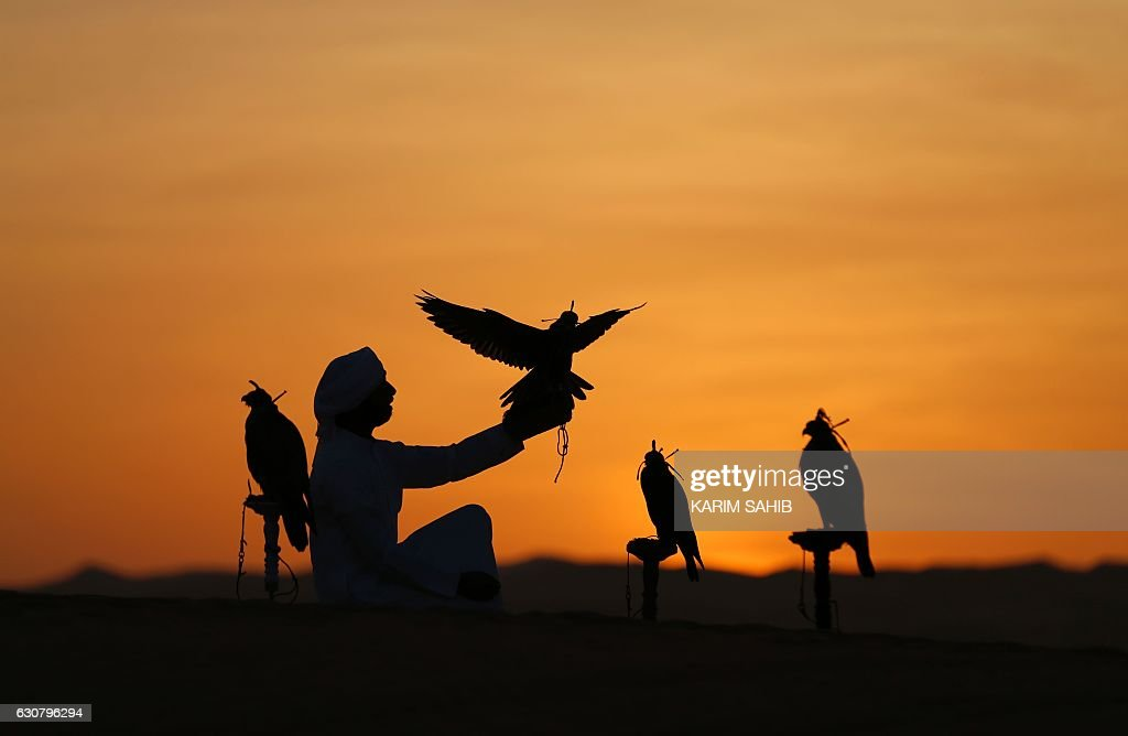 TOPSHOT - An Emirati from the Qubaisi tribe trains falcons in the Liwa desert, some 250 kilometres west of the Gulf emirate of Abu Dhabi, during the Liwa 2017 Moreeb Dune Festival on January 2, 2017. The festival, which attracts participants from around the Gulf region, includes a variety of races (cars, bikes, falcons, camels and horses) or other activities aimed at promoting the country's folklore. / AFP / Karim Sahib