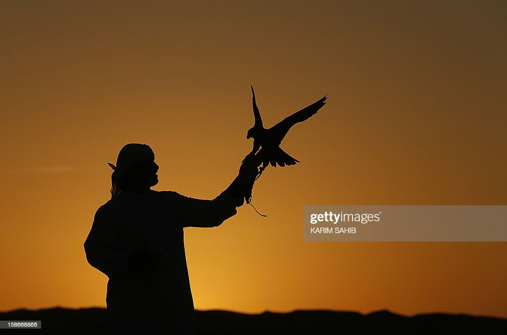 An Emirati man holds his falcon at the Liwa desert, 220 kms west of Abu Dhabi, on the sidelines of the Mazayin Dhafra Camel Festival on December 23, 2012. The festival, which attracts participants from around the Gulf region, includes a camel beauty contest, a display of UAE handcrafts and other activities aimed at promoting the country's folklore. AFP PHOTO/KARIM SAHIB