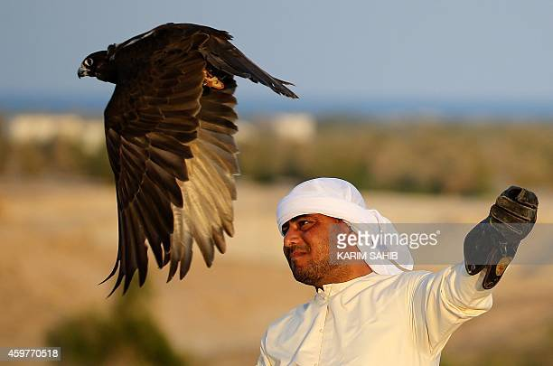 An Emirati man looks on as a falcon takes off on Sir Bani Yas Island one of the largest natural islands in the United Arab Emirates on November 27...