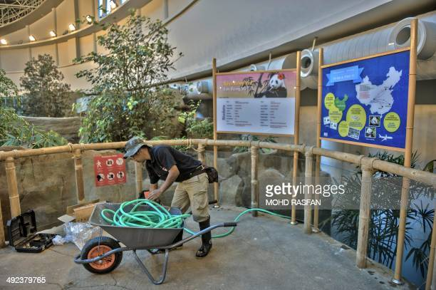 An emplloyee works inside the enclosure for giant Pandas Fu Wa and Feng Yi on loan from China at the National Zoo in Kuala Lumpur on May 20 2014 Fu...