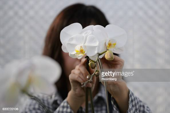 An employee affixes an orchids to a metal stake in a greenhouse at Ushimura Orchid Farm a supplier to ArtGreen Co in Ebina City Kanagawa Prefecture...