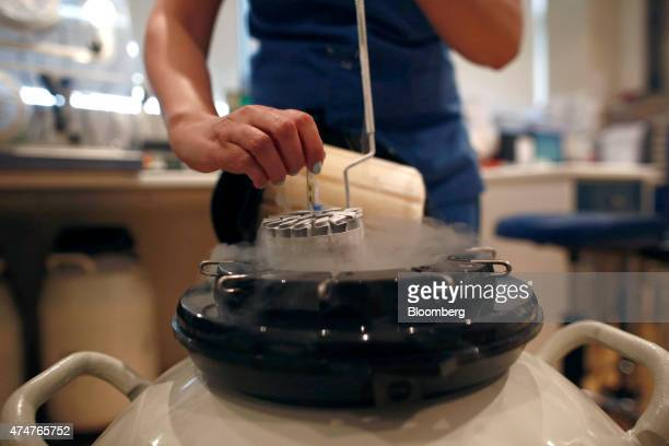 An employee arranges a test tube in a container used to freeze human eggs in a laboratory for In Vitro Fertilisation at the Genesis fertility clinic...