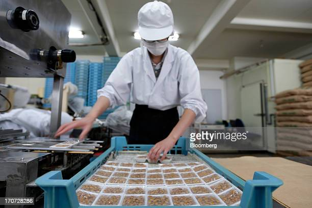 An employee arranges polystyrene trays of steamed soybeans sprayed with the Bacillus subtilis natto bacterium for fermentation in a crate at the...