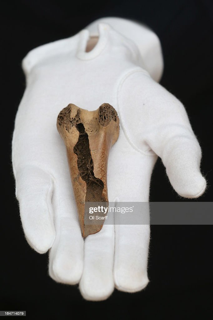 An employee at Christie's auction house holds a rare fragment from a dodo's femur bone on March 27, 2013 in London, England. The extinct bird's bone is expected to fetch 15,000 GBP when it features in Christie's 'Travel, Science and Natural History' sale, which is to be held on April 24, 2013 in London. It is believed to be the first dodo bone that has come to auction since 1934.