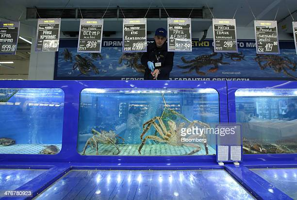 An employee attempts to retrieve a live spider crab from a tank in the fish section of a Metro AG Cash Carry supermarket store in Moscow Russia on...