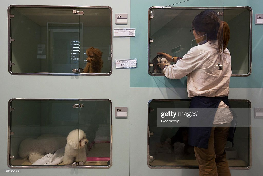 An employee checks on a pair of dogs in the pet hotel section of Irion pet care center in the Gangnam district of Seoul, South Korea, on Saturday, Dec. 15, 2012. South Koreans vote on Dec. 19 to replace President Lee Myung Bak, whose five-year term ends in February. Photographer: SeongJoon Cho/Bloomberg via Getty Images