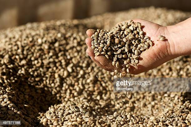 An employee checks the quality of coffee beans before roasting at the Luigi Lavazza SpA coffee production and training facility in Turin Italy on...