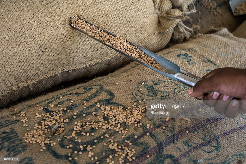 An employee checks the quality of guar seed in a processing plant on the outskirts of Mathania, in the district of Jodhpur in Rajasthan, India, on Monday, Oct. 29, 2012. Guar gum is used to blend materials used in fracking. Photographer: Sanjit Das/Bloomberg via Getty Images