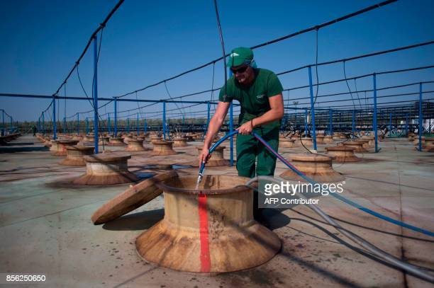 An employee cleans an olive tank in 'Agro Sevilla' olive manufacturing company in La Roda de Andalucia on September 29 2017 / AFP PHOTO / JORGE...