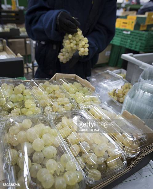 An employee cleans certified Vinalopo grapes at a vineyard processing plant in La Romana eastern Spain on December 26 2016 In a nearly century old...