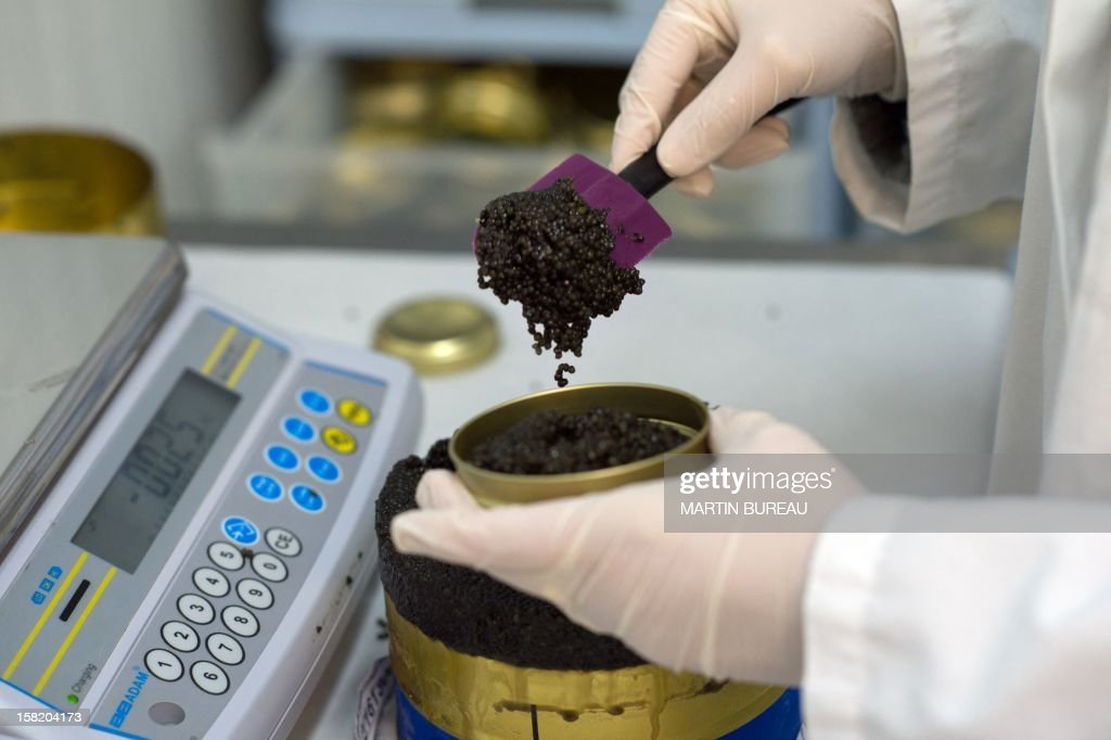 An employee fills boxes with Bulgarian caviar in the lab of Kaspia Caviar, on December 11, 2012 in Paris.