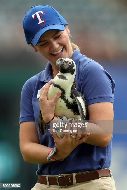 An employee from the Dallas Zoo carries a penguin off the field before the Texas Rangers take on the Toronto Blue Jays at Globe Life Park in...