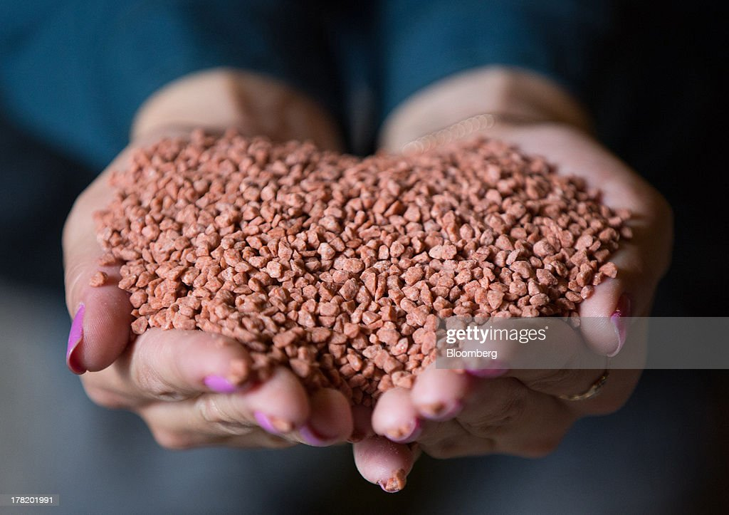 An employee holds handfuls of potash grains in this arranged photograph taken at a storage facility operated by OAO Uralkali in Berezniki, Russia, on Monday, Aug. 26, 2013. Russia pressured Belarus to free Vladislav Baumgertner, the head of OAO Uralkali, the world's biggest potash producer, saying a refusal may harm relations as the smaller nation faces a funding crunch. Photographer: Andrey Rudakov/Bloomberg via Getty Images