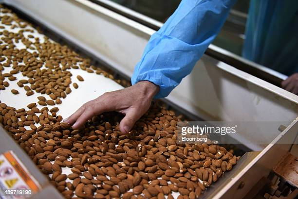 An employee inspects almonds moving along a conveyor at a Select Harvest Ltd plant near Wemen Victoria Australia on Wednesday Sept 23 2015 Bees...